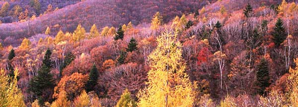 この画像には alt 属性が指定されておらず、ファイル名は siki_autumn.jpg です