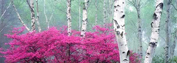 この画像には alt 属性が指定されておらず、ファイル名は siki_spring.jpg です