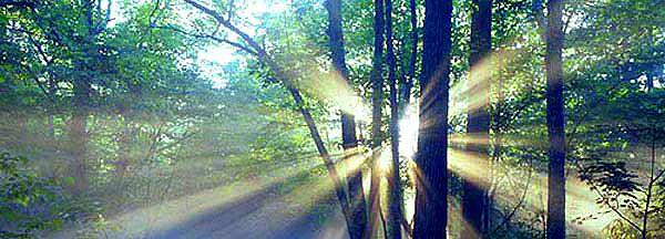 この画像には alt 属性が指定されておらず、ファイル名は siki_summer.jpg です