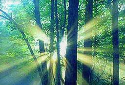 この画像には alt 属性が指定されておらず、ファイル名は summer_light.jpg です