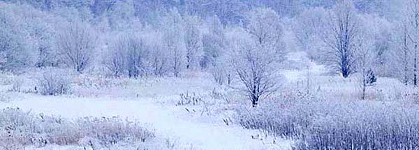 この画像には alt 属性が指定されておらず、ファイル名は siki_winter.jpg です