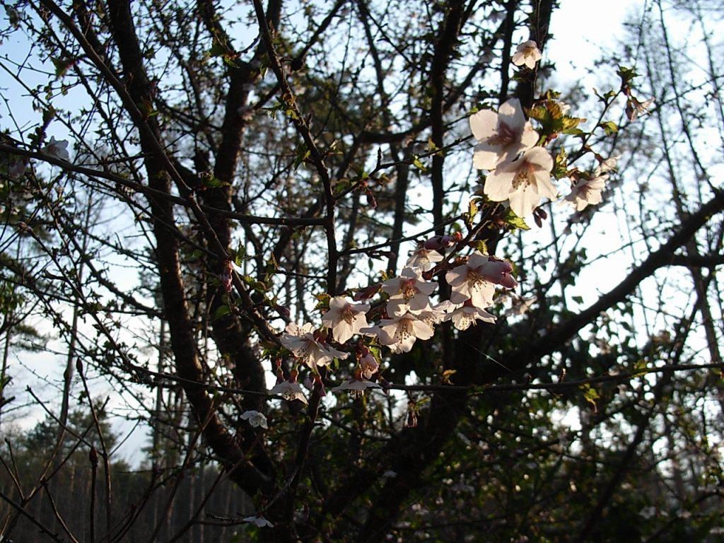 八ヶ岳・富士見高原の宿/花が咲く