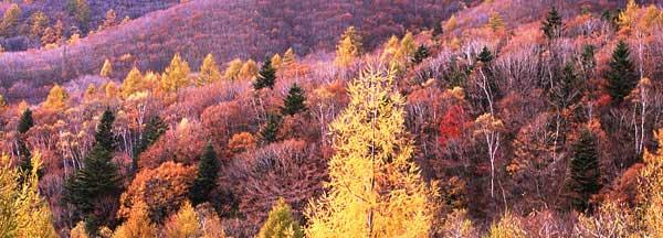 画像に alt 属性が指定されていません。ファイル名: siki_autumn.jpg