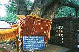 BodhGaya / India
