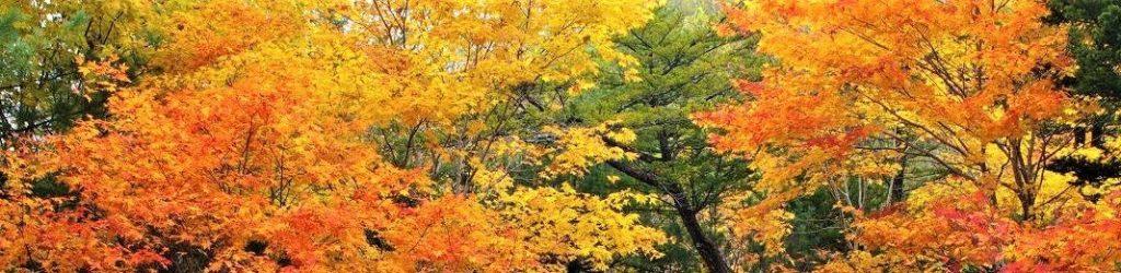 八ヶ岳・富士見高原の宿/紅葉