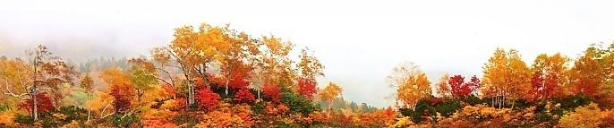 八ケ岳の紅葉