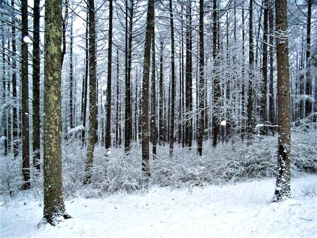 妖精が出てきそうな森の雪景色